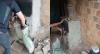 Mulher é presa por sedar e matar marido carbonizado em fornalha de fumo
