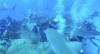 Dennys vira isca de tubarões nas Bahamas!