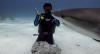 Dennys Motta mergulha com tubarões no Encrenca deste domingo (23)