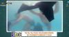 Tal Pai, Tal Filho: Vestindo-se embaixo d'água