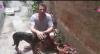 Cão perdido é salvo por motorista de ônibus na via TransOlímpica (RJ)