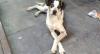 Vídeos mostram cachorro agredido por segurança em supermercado em Osasco