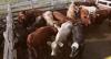 China encontra coronavírus em produtos brasileiros