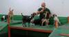 Creche para cães ajuda tutores e realiza atividades com pets