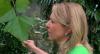 Plantas medicinais: erva baleeira alivia cólica menstrual