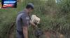 Traficantes são flagrados dentro de mata por cães policiais