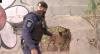 Cão farejador encontra drogas escondidas e dupla é detida pela polícia