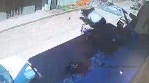 Boi foge de fazenda, invade comércio e deixa estragos em MG; veja vídeo