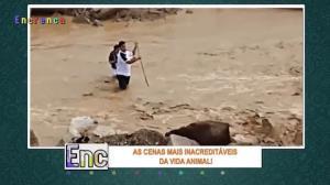 Homens se arriscam em rio para salvar dois filhotes de cachorro
