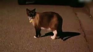 Câmera instalada para desvendar furtos flagra inacreditável gato ladrão