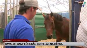 Cavalos campeões são estrelas na Hípica Paulista