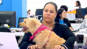 Empresa libera entrada de cachorros para combater estresse dos funcionários