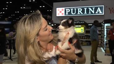 Feira para pets nos Estados Unidos traz a �ltimas novidades do setor