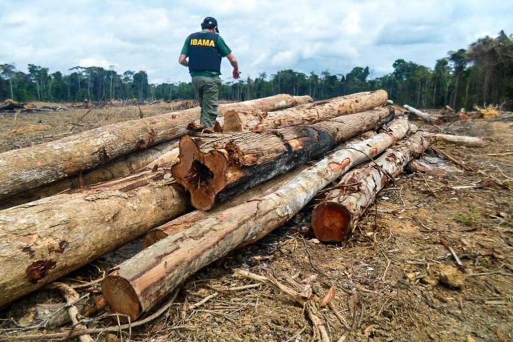 Desmatamento na Amazônia registra queda de 16%