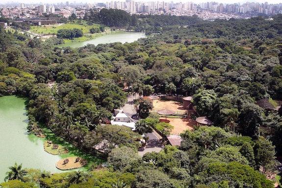 Jardim Botânico de SP fecha por causa de febre amarela, afetando corredores