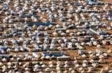ONU registra campos de refugiados vistos de cima