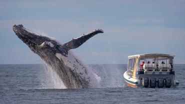 Turistas perdem salto de baleia ao lado de barco na Austrália