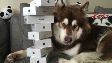 Filho de bilionário chinês compra oito iPhones para seu cachorro