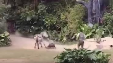 Tratador é atacado por zebra em zoológico na China