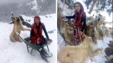 Garota de 11 anos e seu cão resgatam cabra grávida e seu filhote de nevasca