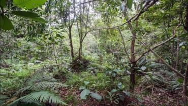 Você consegue encontrar os 12 soldados escondidos nesta foto na selva?