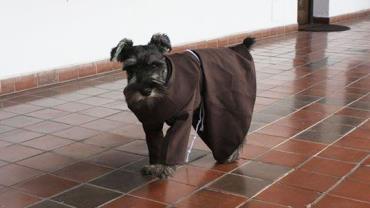 Cachorro órfão é adotado por monastério e se torna 'monge honorário' do local