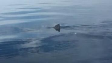 Pai e filho passam por momentos de terror quando tubarão-branco de 5 metros se aproxima de seu barco