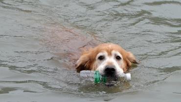 Cachorro vira herói na web após retirar 2 mil garrafas de rio
