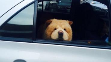 Cachorro ganha fãs na web por semelhança com ursinho de pelúcia