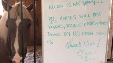 Pai resolve cortar franja de cavalo em celeiro onde é voluntário e deixa donos perplexos