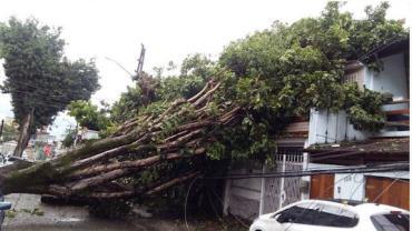 Fortes rajadas de vento derrubam árvores no Rio de Janeiro