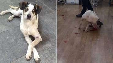 Cachorro é morto após ser espancado e envenenado em supermercado em Osasco