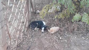Cadela é estuprada por dono; enteado do agressor denunciou o crime