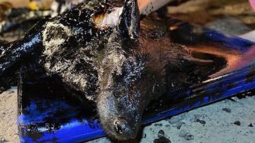 Cachorrinha é salva após ser encontrada com corpo coberto de piche