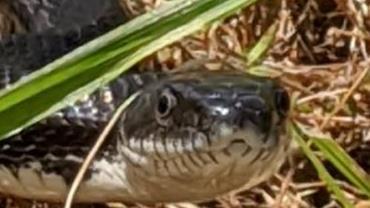 """Homem mata cobra venenosa a mordidas por animal ter """"bloqueado seu caminho"""""""