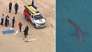 Surfista de 60 anos morre após ataque de tubarão branco na Austrália
