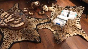 Cobras e tapetes de onça são encontrados em operação da PF no Rio