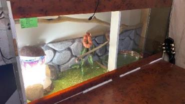 Proibidas de serem importadas, homem é preso com três cobras exóticas na Zona Oeste do Rio