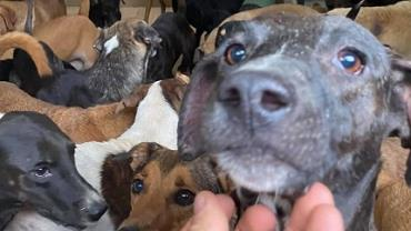 Homem usa sua própria casa para proteger 300 cachorros durante furacão