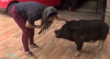 """Ex-BBB Vanessa Mesquita apresenta seu porco de estimação: """"Era o meu sonho"""""""