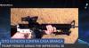 Trump libera impressão 3D de armas de fogo