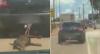 Câmera de segurança flagra cachorro sendo arrastado em reboque de carro