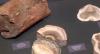 Museu de BH promove exposição inédita de fósseis do seu acervo