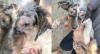 MG: Mulher é presa por maus-tratos a animais em Belo Horizonte