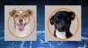 Campanha estimula adoção de cães e gatos pelo Linkedin