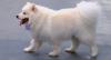 Espaço exclusivo para cães denominado 'cachorródromo' é aberto em São Paulo