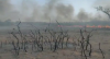 """Pantanal: """"Esforço quase impossível para controlar o fogo"""", diz coronel"""