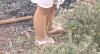 Mulher espanca filha de 4 anos por rabiscar parede no Distrito Federal