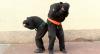Os Ninjas: Pra Eles, Nada é Impossível!