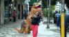 Dino: A moça saiu correndo do Dino!